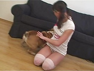Famous Little Caprice with English bulldog